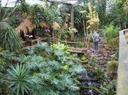 Jungle-hutje