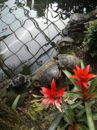 Vele schildpadjes