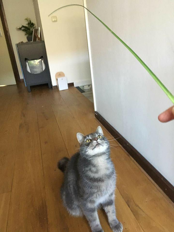 (Huis)dierenmanieren