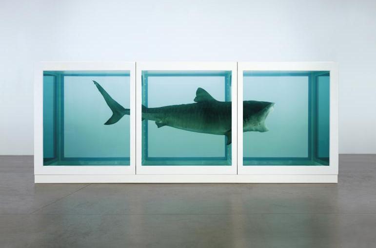 Kunst voor Dummies: een rottende haai op sterkwater